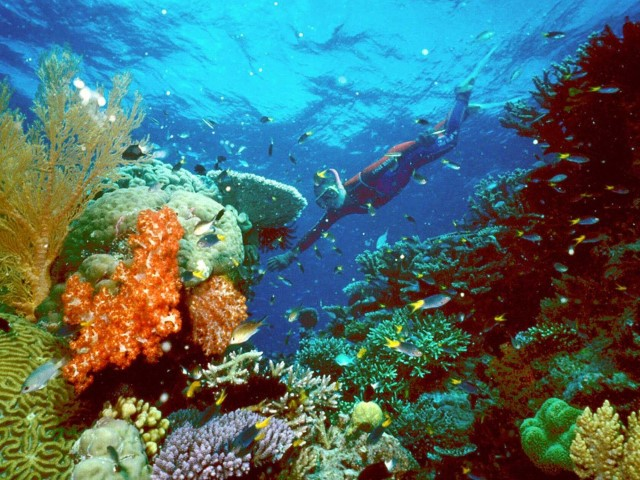 REUTERS/HO/Great Barrier Reef National Park Authority