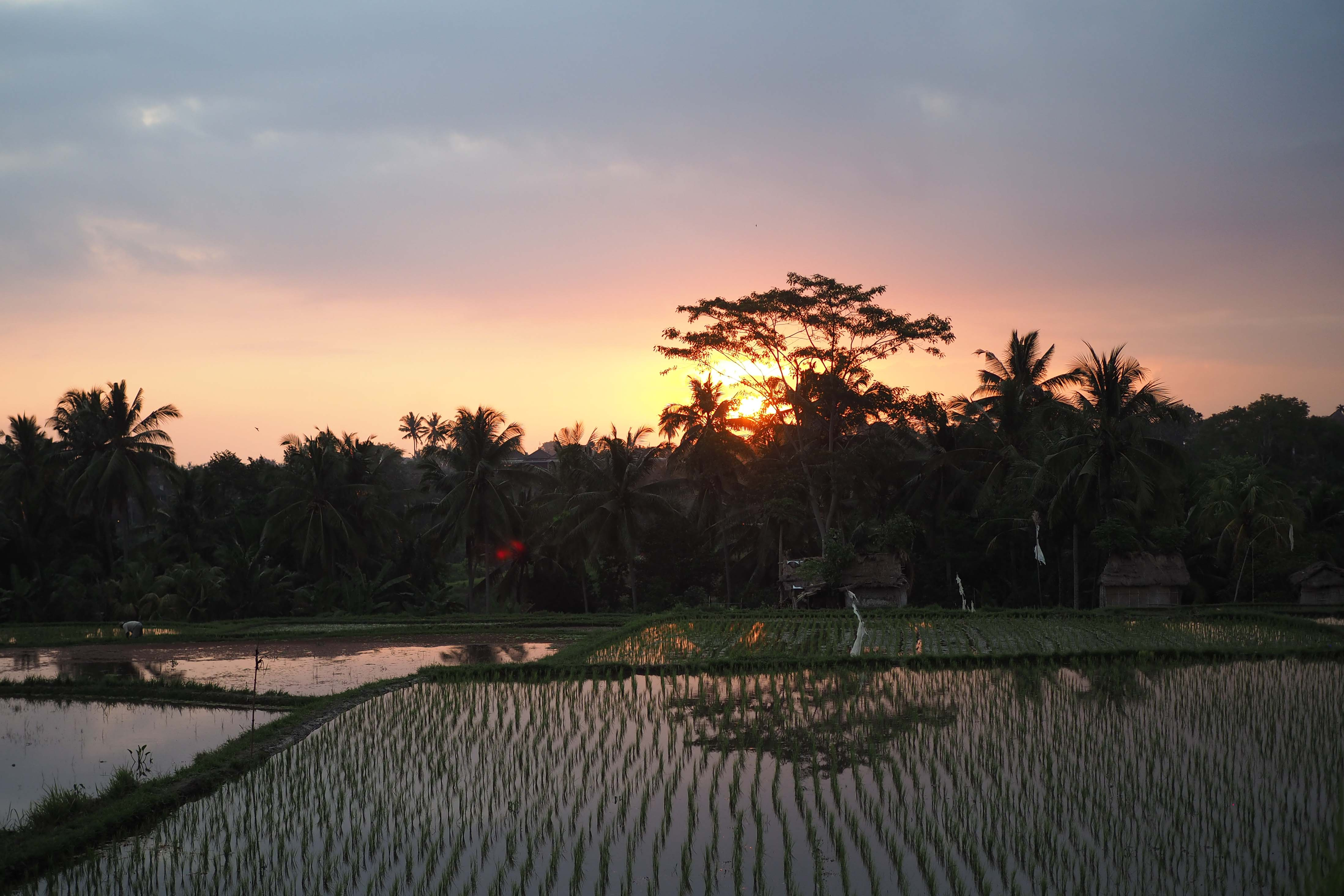 Let loose in Ubud,BALI INDONESIA