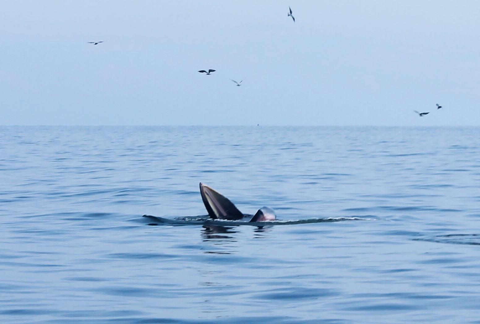 เที่ยวเพชรบุรีปลายปี กินหอย ดูปลาวาฬ ชมพระอาทิตย์ขึ้น สุดฟิน!
