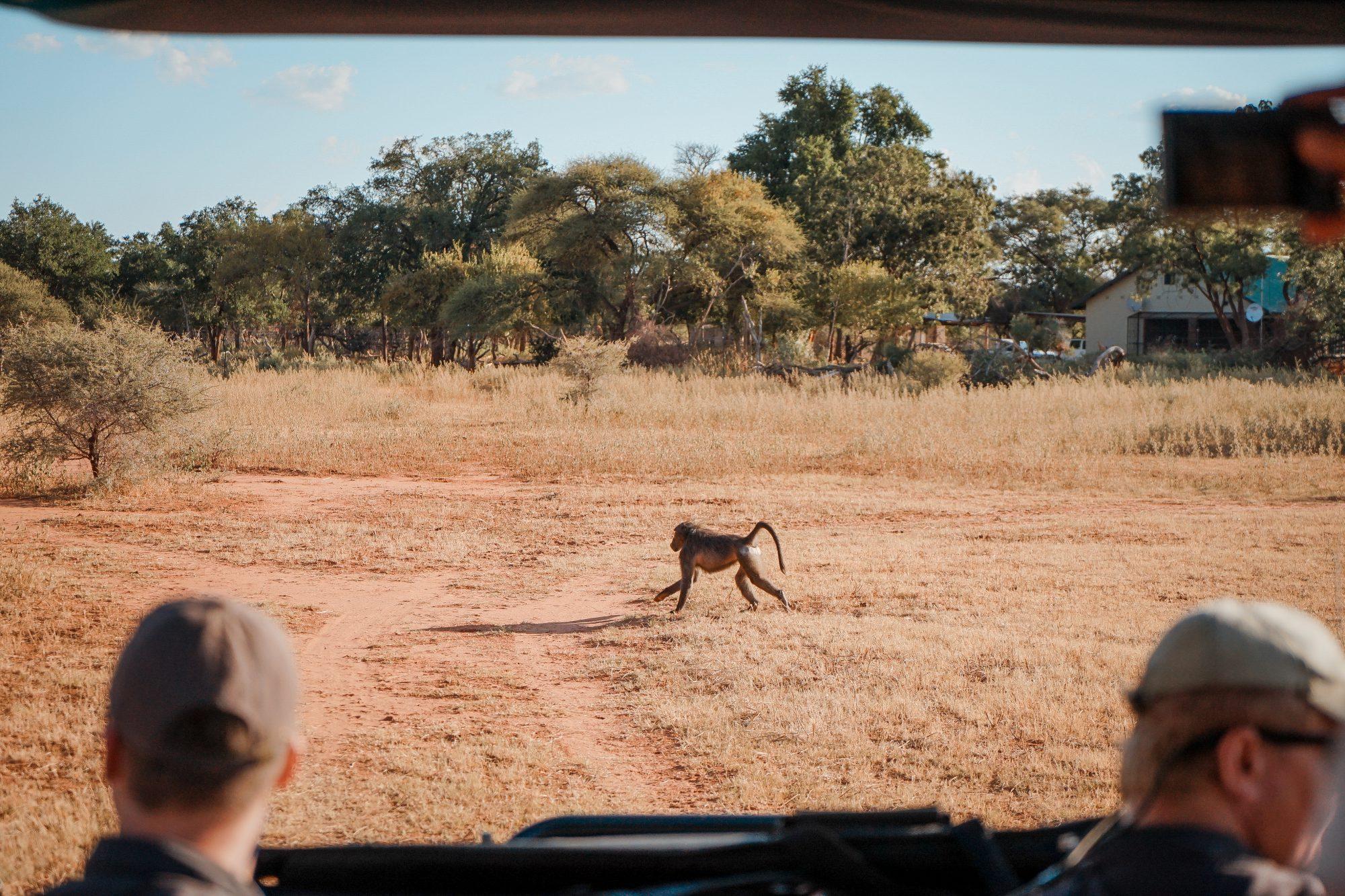 Deep in the Safari, South Africa.