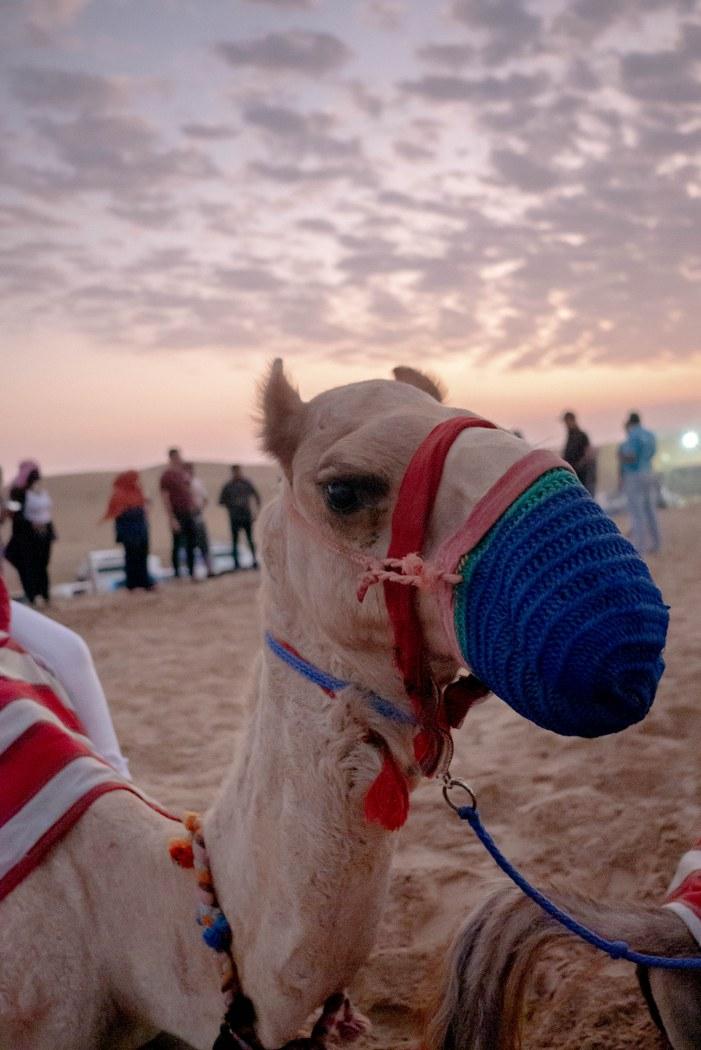 Visit Dubai!